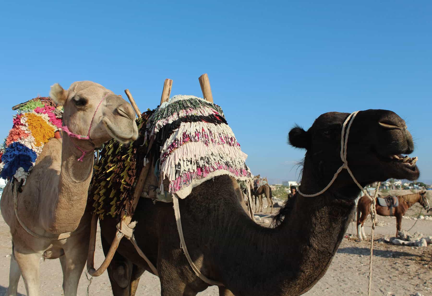 Détail de route de chameau vagues bleues Maroc