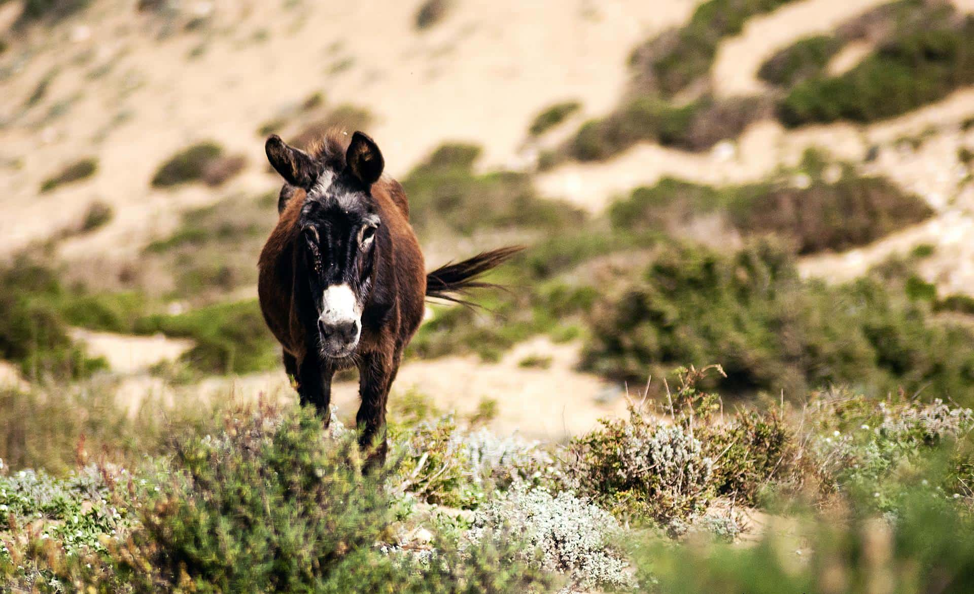 donkey in the montain