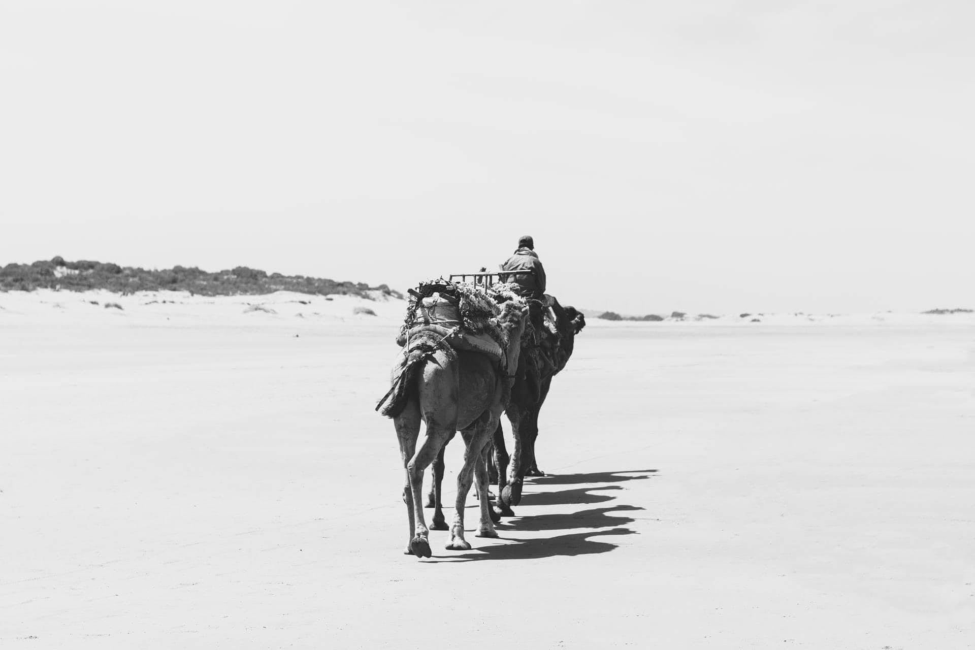 travel in camel by blue waves