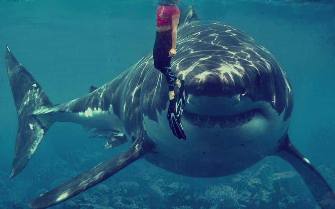 A shark attacks in Australia