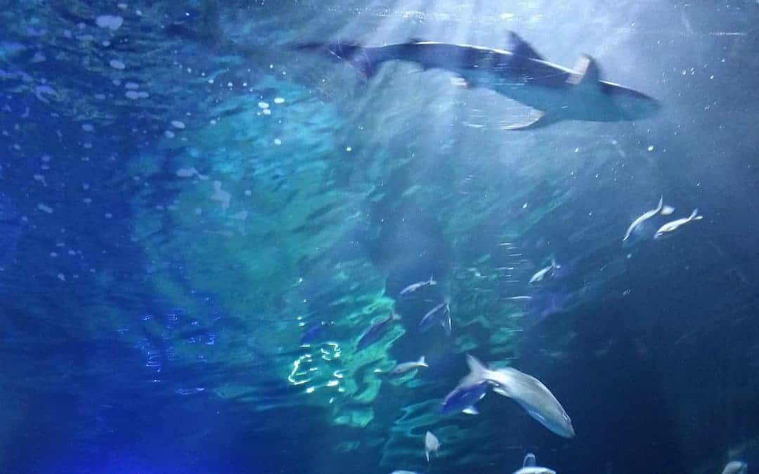 Margaret River Pro Cancelled Due to Shark Activity